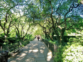 We stroll a dappled shaded by crabapple trees in Central Park.