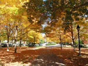 We walk through a carpet of autumn leaves in Cooperstown.
