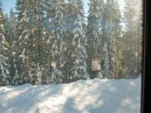 As we climb higher through the Sierras, snow clings to the trees.