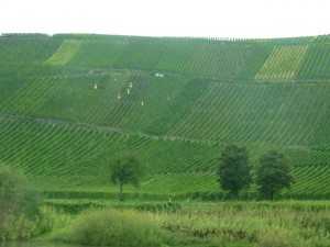The Mosel River is lined nearly its full length with steep  vineyards.
