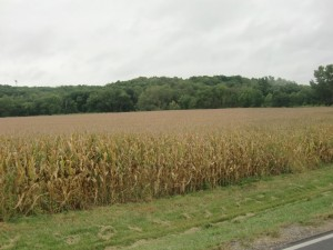 Cornfields are a common sight along the Kansas highway.