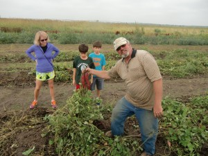 At the Pendleton Farm, the farmer helps a woman and her two sons pull yams out of the ground.