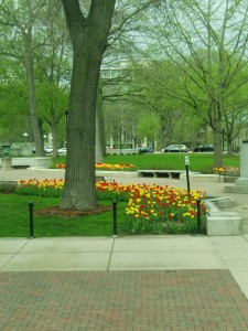 "There are more tulips at the capitol than we saw in the ""tulip capitol"" in Holland, Michigan."
