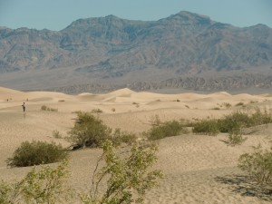 The Mesquite Flats Sand Dunes stretch ahead for many miles. In the morning it is a good place to find animal tracks.