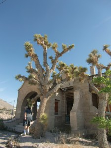 Joshua Trees are the only landscaping of the old railway station.