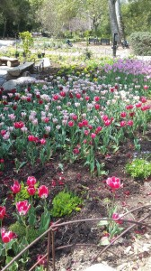 Tulips added so much color to the site.