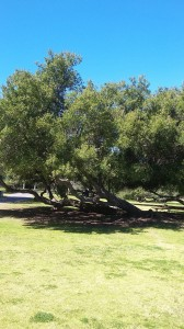 The restful part of the park is a paradise of lawns, giant trees, and picnic benches.