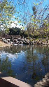 A rocky waterfall splashes from the lake into the duck pond.