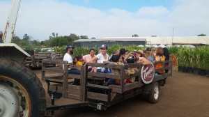 A tractor hauls these wagons on a tour of Tanaka Farms.