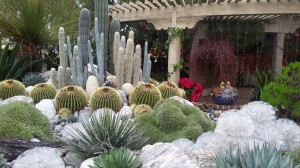 Desert plants become the theme of this garden.