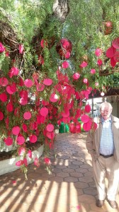 This old pepper tree is decorated with wishes written on a disc of red paper by visiting students.